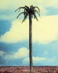 1-35-Straight-Palm-Tree-Trunk