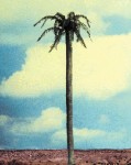 1-35-Straight-Palm-Tree-Trunk