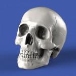 1-35-Skulls-54mm-8-pcs