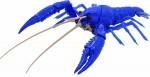 Creature-Arc-Procambarus-Clarkii-Louisiana-Crawfish-Blue