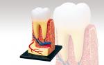 4D-Human-Anatomy-Triple-Root-Molar-Model