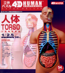 Super-Deluxe-Torso-Anatomy-Model