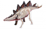 4D-VISION-Stegosaurus-Anatomy-Model