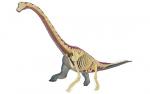 4D-VISION-Brachiosaurus-Anatomy-Model