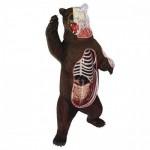 4D-VISION-Bear-Anatomy-Model