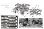 RARE-1-35-Palm-Plants