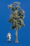 1-35-Large-Tree-Kit