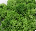 Hmota-na-rostliny-Plant-mass-20g-Medium-Green