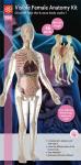 56cm-Visible-Female-Anatomy-Kit