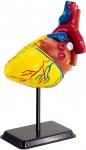 Human-Body-Model-Series-Heart-14cm