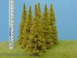 Modrin-140-160mm-podzimni-tree
