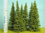 Smrk-140-160-mm-tree