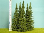 Smrk-180-220-mm-tree