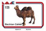 1-35-BACTRIAN-CAMEL