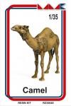 1-35-Camel-Velbloud