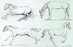 54mm-Horses-5-Assorted-Horses