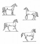54mm-Horses