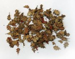 1-35-Leaves-oak-Listi-dub