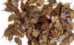 1-35-Oak-leaves-extra-colors-Dubove-listi-extra-barvy