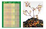 Typical-Leaf-1-Autumn