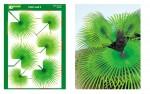 Palm-Leaf-3