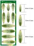 Palm-Leaf-1-Large