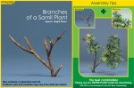 Branches-of-a-small-Plant