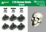 1-35-Human-Skulls-6-pcs