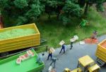 1-120-Fruits-green-25gr-Zelena-jablka