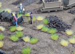 1-160-Soil-of-turf-65g