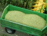 1-35-Maize-Kukurice-100g