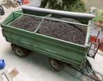 1-35-Bag-of-rapeseed-Pytel-repky-100gr