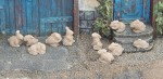 1-32-Rabbits-Kralici-11-pcs