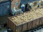 1-48-Sugar-beets-100g