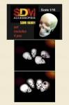 1-16-Human-skull-4pc