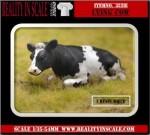 1-35-Lying-Cow