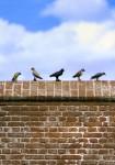 1-35-Small-Birds-Set-1