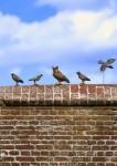 1-35-Small-Birds-Set-2