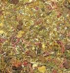 Ground-Detail-Autumn-Forest-posyp