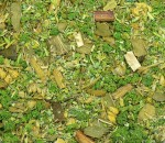 Ground-Detail-Green-Forest-posyp