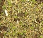 Ground-Detail-Wild-Pasture-posyp