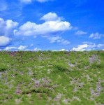 Wild-Grass-Type-1