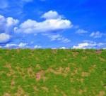 Wild-Grass-Type-3