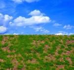Wild-Grass-Type-5