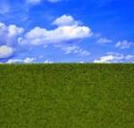 Groomed-Grass