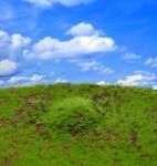 Wild-Grass-and-Hills-Type-1