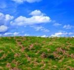 Wild-Grass-and-Hills-Type-2