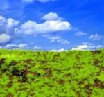 Wild-Grass-and-Hills-Type-3