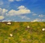 Dry-Rocky-Meadow