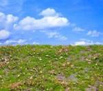Autumn-Meadow